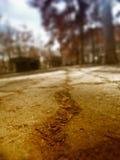 Close-up da poeira Fotos de Stock Royalty Free