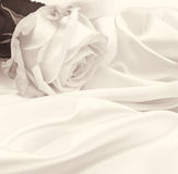 Close-up da rosa do branco como o fundo No sepia tonificado Estilo retro Fotos de Stock Royalty Free
