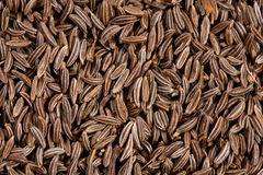 Close-up da semente de alcaravia Imagens de Stock Royalty Free