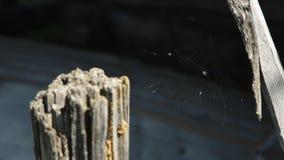 Close up da teia de aranha, a Web de aranha bonita video estoque