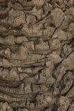 Close up da textura da casca de árvore, fundo de madeira Fotografia de Stock Royalty Free