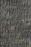 Close up da textura da casca de árvore, fundo de madeira Foto de Stock Royalty Free
