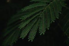 Close up da textura da folha Imagem de Stock Royalty Free