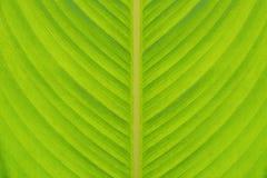 Close up da textura da folha Fotografia de Stock