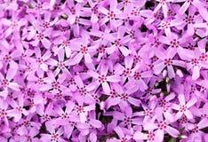 Close up da textura das flores Imagens de Stock Royalty Free