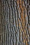 Close up da textura disparado da casca de árvore marrom Fotografia de Stock