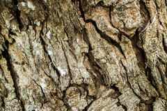 Close up da textura da natureza da casca fotos de stock