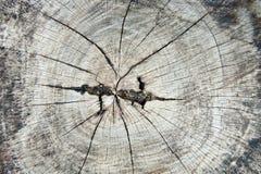 Textura do coto de árvore velho Foto de Stock Royalty Free