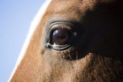 Close up da vista lateral de um olho bonito do cavalo Fotografia de Stock