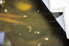Close-up da Web de aranha imagens de stock