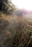 Close up da Web do ` s da aranha com gotas do orvalho no alvorecer Casa da aranha fotos de stock
