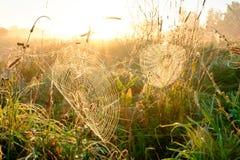 Close up da Web do ` s da aranha com gotas do orvalho no alvorecer Grama molhada antes do aumento do sol Web de aranha com gotas  fotografia de stock