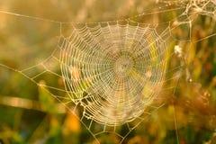 Close up da Web do ` s da aranha com gotas do orvalho no alvorecer Grama molhada antes do aumento do sol Web de aranha com gotas  foto de stock
