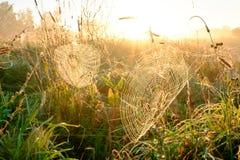 Close up da Web do ` s da aranha com gotas do orvalho no alvorecer Grama molhada antes do aumento do sol Web de aranha com gotas  fotos de stock royalty free