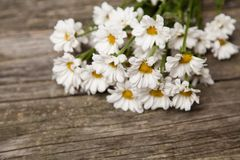 Close up of daisies on wooden background Royalty Free Stock Photos