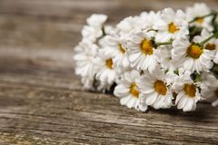 Close up of daisies on wooden background Stock Photography