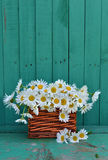 Close up of daisy flowers in wicker vertical Royalty Free Stock Photos