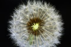 Close-up of dandelion Stock Photos