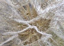 Close up dandelion Stock Photos