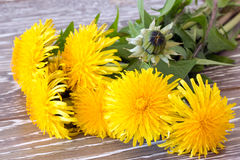 Close-up of dandelion Stock Image
