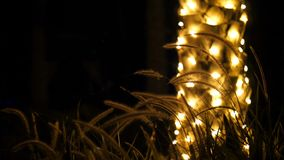 Close-up. in the dark, against the background of a trunk of a palm tree decorated with illumination, spikelets and grass. Swaying in the wind, in the rays of stock footage