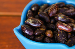 Close up of a dark dry cocoa bean inside of a blue plastic bowl on wooden blackground Royalty Free Stock Photo