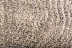 Close-up of dark gray wood bog oak composition. High resolution photo Stock Images