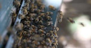 Close up das abelhas filme