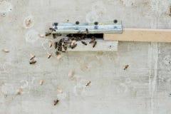 Close up das abelhas no favo de mel no apiário Fotos de Stock Royalty Free