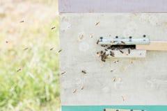 Close up das abelhas no favo de mel no apiário Imagem de Stock Royalty Free