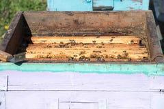 Close up das abelhas no favo de mel no apiário Fotos de Stock