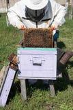 Close up das abelhas no favo de mel no apiário Foto de Stock