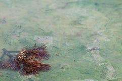 Close-up das bactérias do geyser Fotografia de Stock