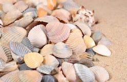 Close-up das conchas do mar em uma areia da praia Imagens de Stock