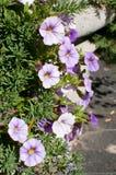 Close up das flores Imagens de Stock