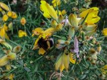Close up das flores e da abelha em Nova Zelândia foto de stock