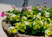 Close-up das flores recentemente plantadas vistas em um arranjo de suspensão da cesta em um berçário do jardim fotos de stock
