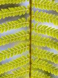 Close-up das folhas da samambaia no jardim tropical Fotografia de Stock