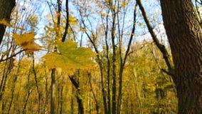 close up das folhas de outono video estoque
