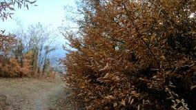 Close-up das folhas de outono video estoque