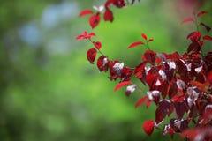 Close-up das folhas de outono em um fundo verde-claro Seque as folhas da ameixa Ambiente colorido excitante Natureza do verão imagem de stock