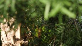 Close-up das folhas verdes das árvores no sol morno A planta carnuda verde deixa alongado iluminado pela luz solar no fundo de video estoque