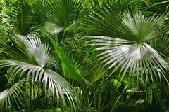 Close-up das folhas verdes Imagem de Stock