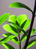 Close-up das folhas verdes bem iluminados, fazendo um jogo da luz e da sombra imagens de stock royalty free