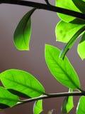Close-up das folhas verdes bem iluminados, fazendo um jogo da luz e da sombra imagens de stock