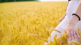 Close up das mãos da jovem mulher que tocam no trigo maduro que anda no campo no verão filme