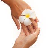 Close-up das mãos fêmeas no óleo que guarda a flor sobre fotografia de stock royalty free