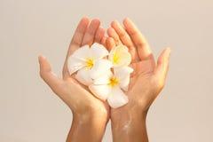 Close-up das mãos fêmeas no óleo que guarda a flor sobre fotos de stock royalty free