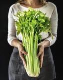 Close up das mãos que guardam o aipo orgânico fresco Imagens de Stock