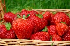 Close-up das morangos em uma cesta Imagens de Stock Royalty Free